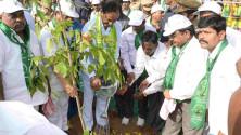 CM KCR in Harithaharam programme at peddapalli (10)